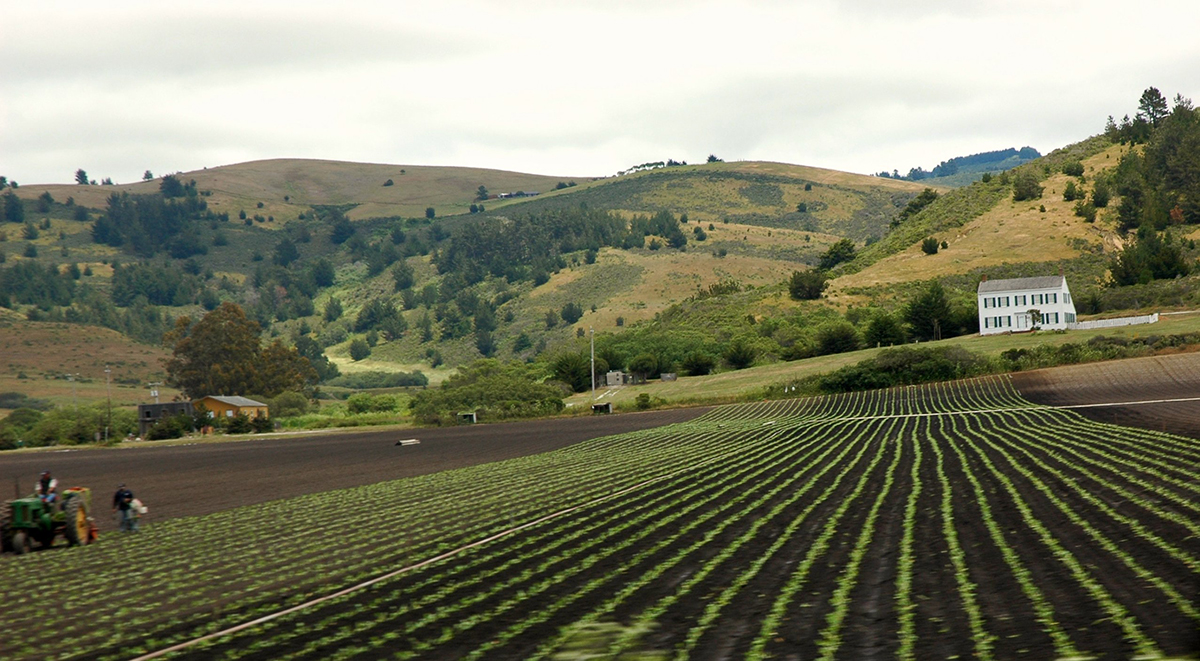 Field plowed and planted with small green rows of plants in front of backdrop of hills and white house.