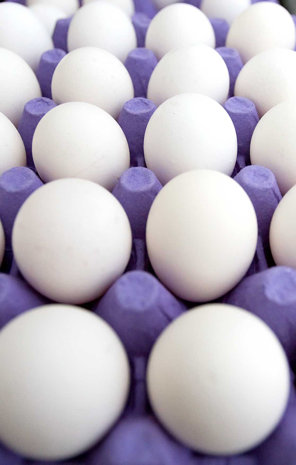 Four rows of white eggs sitting neatly in a purple carton.