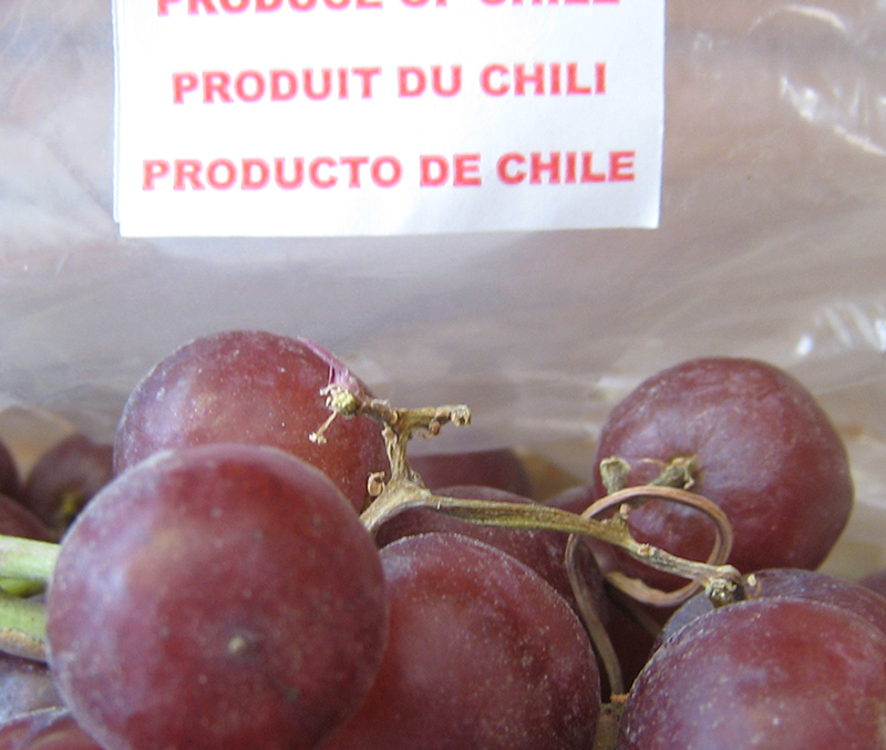 Close-up of red grapes with country of origin label in background, indicating the grapes are a product of Chile.