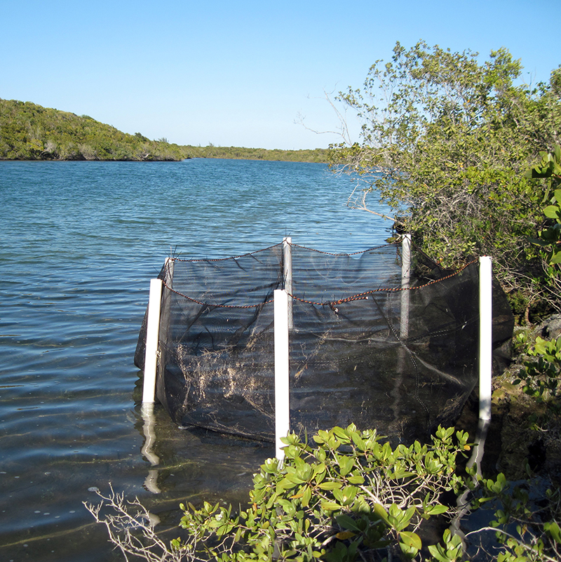 Open pond surrounded by vegetation, with study plot at the edge enclosed by black netting supported by white, plastic pipe.