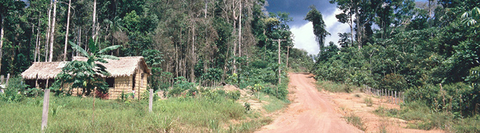 Dirt road disappears into distance. Thatched roof hut on left. Scene surrounded by dense tropical forest