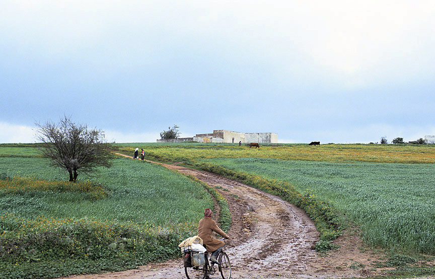 Photo shows person on loaded bike riding along muddy road that sweeps uphill and to the left, in the midst of a grain field.