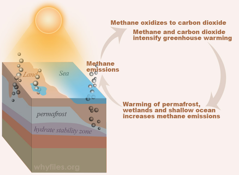 diagram shows that methane emissions leads to increased greenhouse warming and CO2 formation from CH4, which leads to warming of tundra surface and some ocean waters, and more methane release