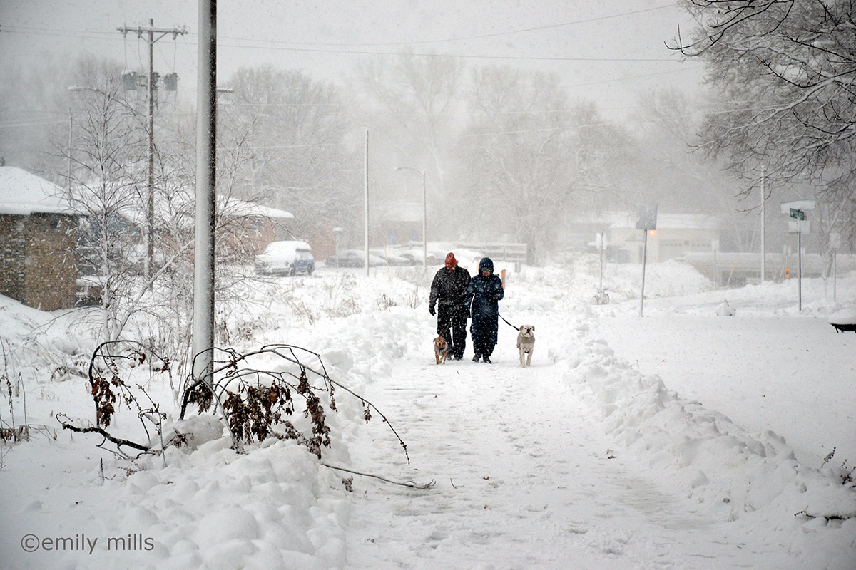 Two men walking in a blizzard with two dogs