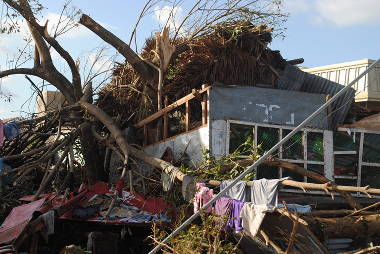 uprooted trees on a collapsed house