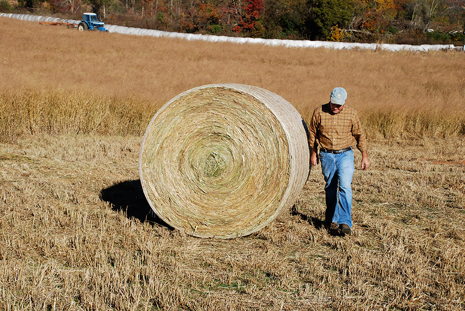 farmer next to large bale of switchgrass
