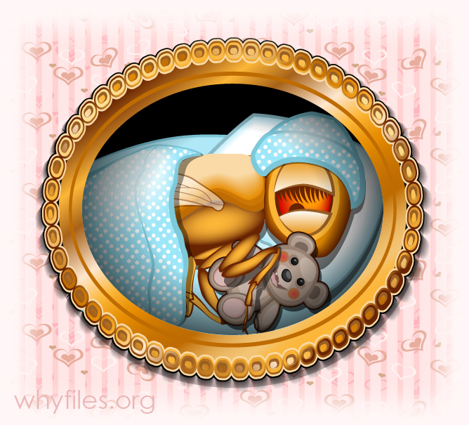 illustration of baby fruit fly in knit hat, with teddy bear and blanket