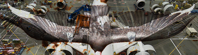 Photo of condor superimposed upon photo of Boeing 787
