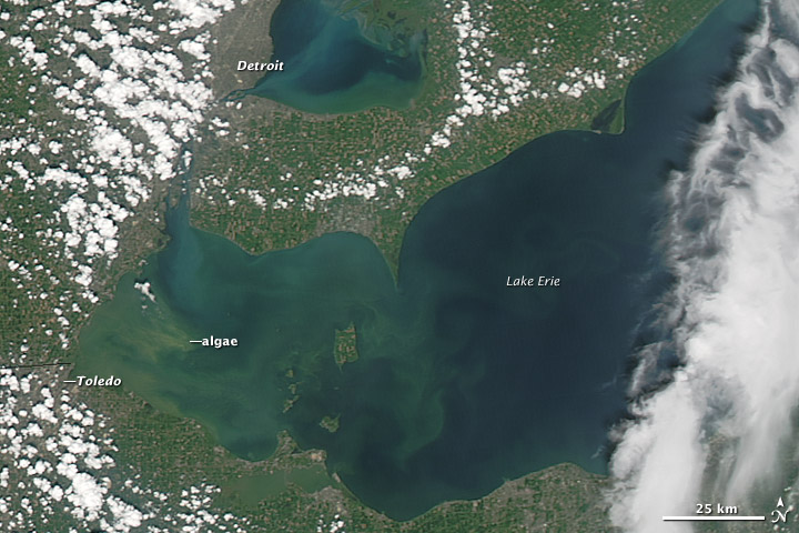 Satellite image of Lake Erie during the August algal bloom showing the extent of the algae across the western section of the Lake. Prevailing winds likely contributed to the buildup of algae in the corner of Lake Erie near Toledo.