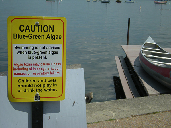 Photo of a posted sign on Lake Mendota pier advising against swimming during algae occurrence