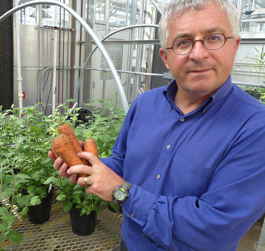 Man in blue shirt and glasses holds a bunch of large carrots, many potted plants in background.