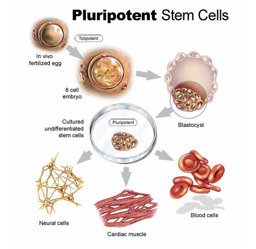 Stem Cell Advance The Why Files
