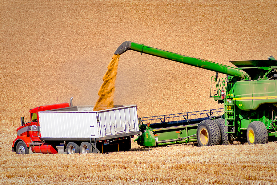 Photo of a wheat harvester pouring the harvested grain into a trailing dumptruck