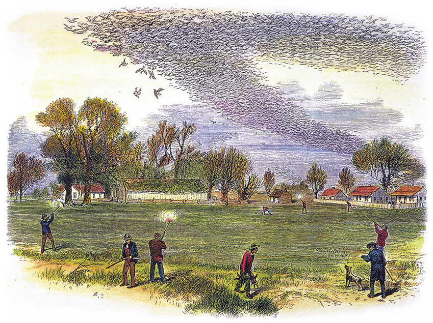 Mid-1800s wood block engraving of 9 hunters shooting an enormous swarm of passenger pigeons; some birds fall, and hunters collect them from the ground.