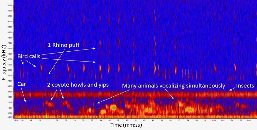 Colorized graph of sound frequency over time from the Fossil Rim Wildlife Center shows different sound events, like bird chirps, coyote yips and rhino grunts. Quieter sounds are blue; louder sounds are red and yellow.