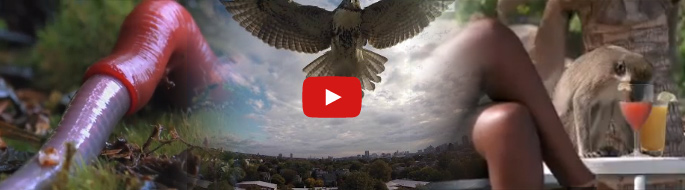 montage of science videos: hawk attack, worm eating leech, alcohol-drinking monkey