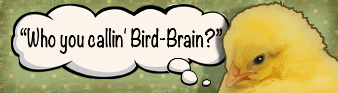 Cartoon chick with thought bubble: 'Who you callin' a bird brain?'