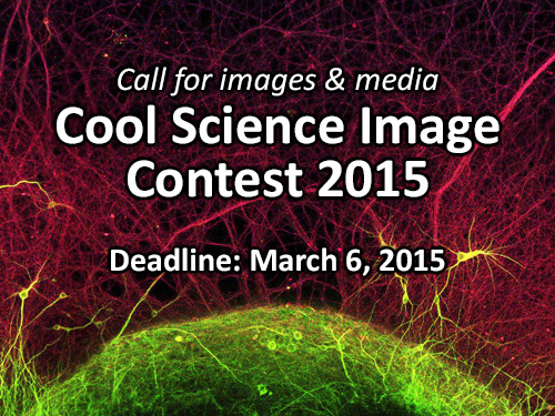2015 Cool Science Image Contest