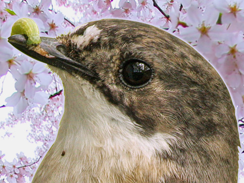 Spring forward: birds and flowers in a warming world!