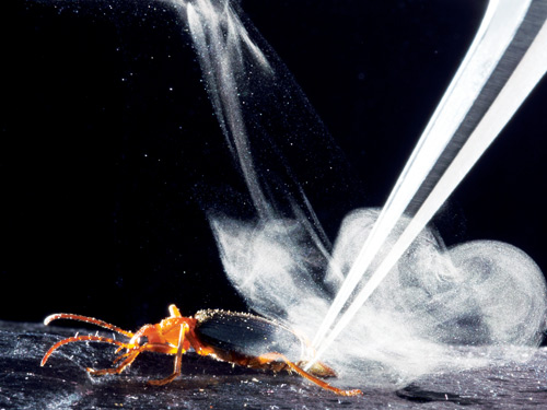 Bombardier beetle spray-bottle explained at last!