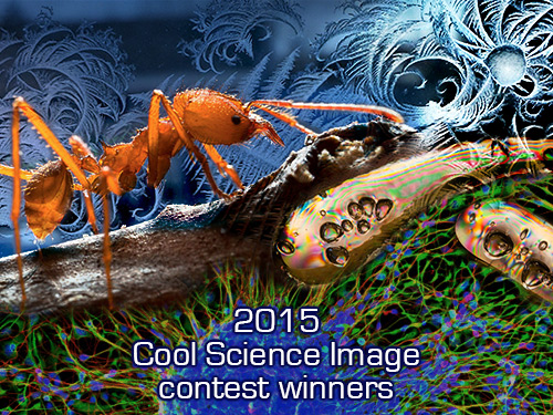 2015 Cool Science Image Contest Winners