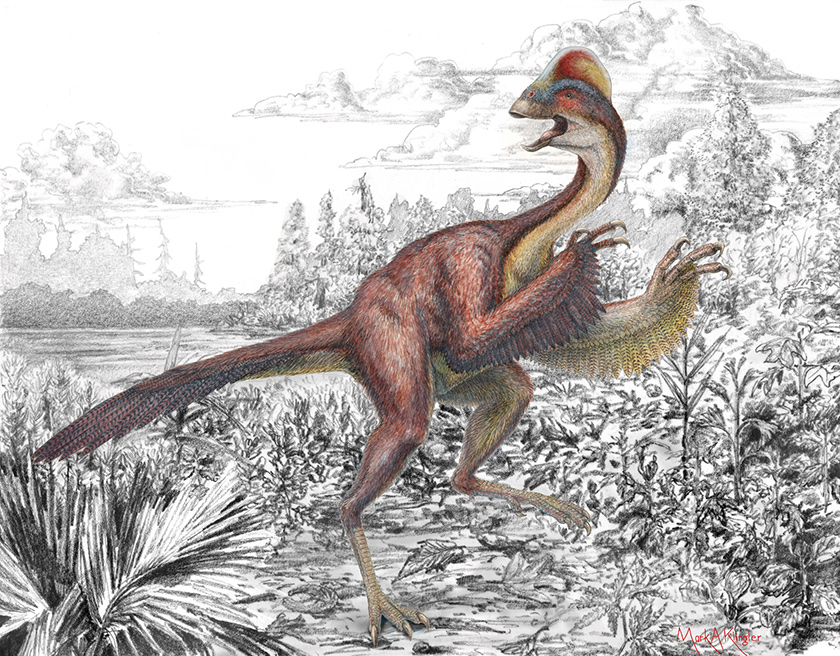 Artist's rendition of a small, feathered dinosaur with chicken feet, taloned claws and a pronounced crown.