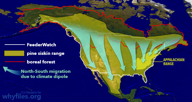Map of North America showing pine siskin range, the boundary of boreal forests and the direction of pine siskin migration related to the climate dipole.