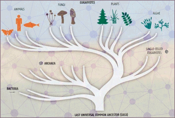 Diagram of the Tree of Cellular Life originating from the Last Universal Common Ancestor, then branching through bacteria, archaea, single-celled eukaryotes and multi-celled organisms.