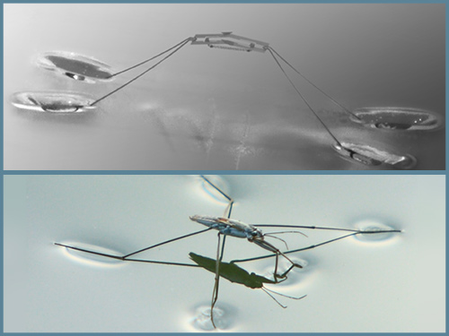 Jumping on water: Water strider shows the way