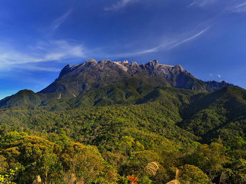 Tropical mountain diversity: species rise from below, but also travel from afar