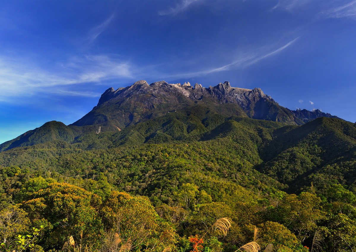 Aerial photo of Mount Kinabalu extending above the lush Malaysian rainforest.