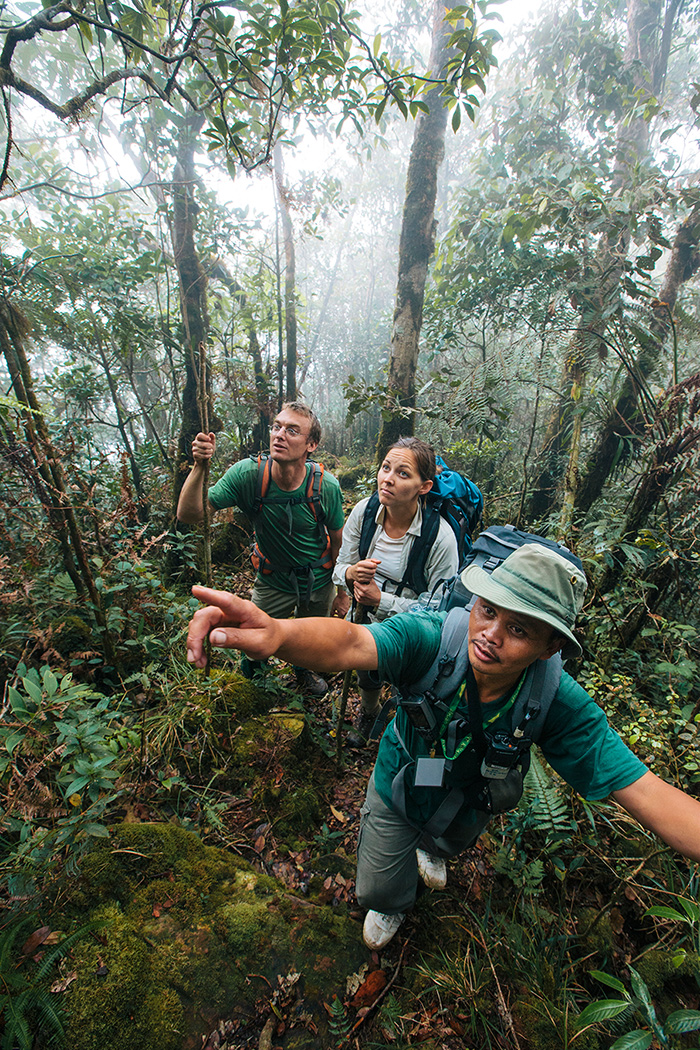 3 scientists in tropical forest, leader pointing something out to the group, pointing up ahead.