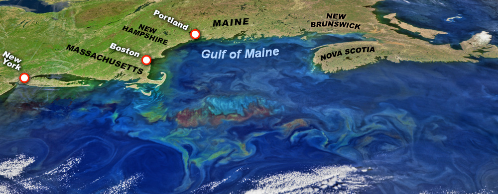 Map of the Gulf Maine and major New England port cities, along with illustrations of prevailing gulf currents and eddies.