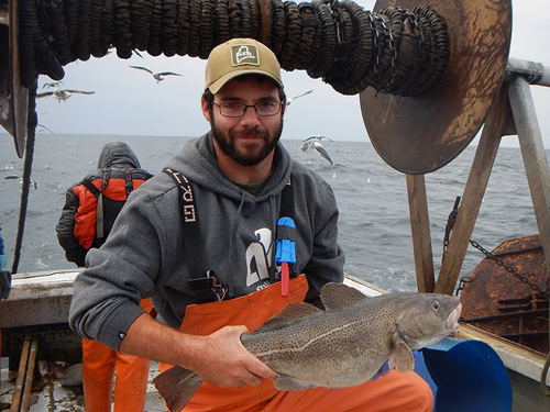 Atlantic cod: Decline mirrors warming sea